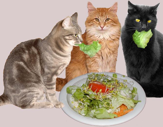 katzen_und_salat