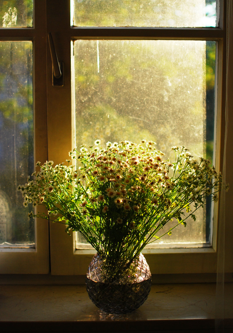 stilllife-blumen-romantic-kamille-fensterbrett-living-inspiration