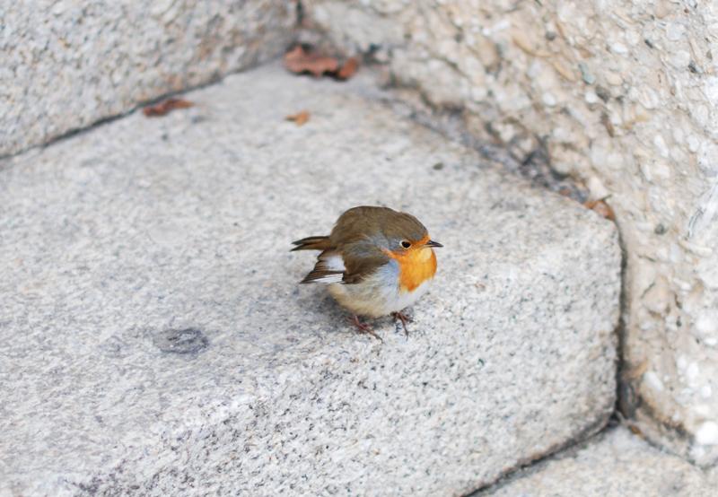 vogel-bird-cute