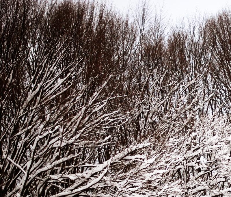 snow-photography-winter-wonderland-2