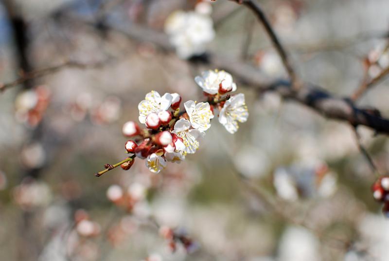 blueten-spring