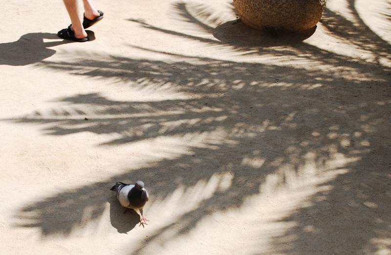 palme-barcelna-schatten-photography-reise