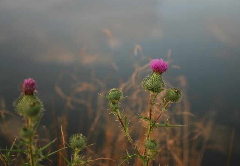 blume-fluss-nature-blogger-travel-urlaub-photography2