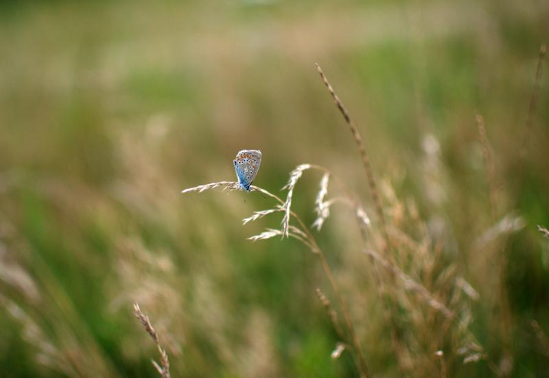 schmetterling-insekt-sommer-feld-natur-nature-travel-blog-urlaub-reise