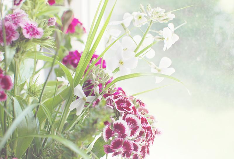 romatic-bartnelken-blumen-flowers